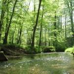 złoty potok